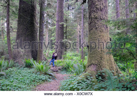 Randy Stoltmann Commemorative Grove, Sitka Spruce trees, Carmanah Walbran Provincial Park, British Columbia, Canada - Stock Photo