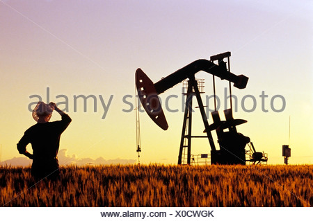 A farmer looks out over a maturing wheat crop with an oil pumpjack in the background near Carlyle, Saskatchewan, Canada - Stock Photo