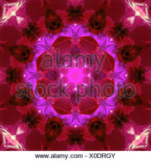 bright energetic mandala ornament from flowers - Stock Photo