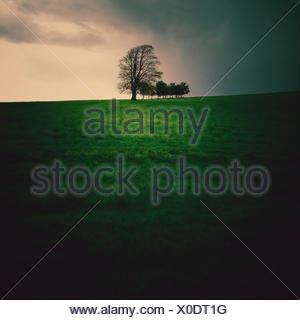 Ireland, Munster, County Kerry, Killarney, Trees on hill - Stock Photo