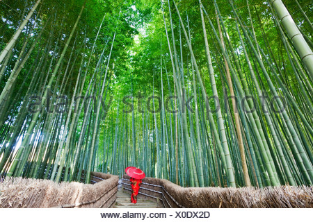 Woman walking in a bamboo forest, Adashino-nenbutsu-ji Temple, Arashiyama, Kyoto Prefecture, Kinki Region, Honshu, Japan - Stock Photo