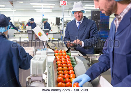 Quality control workers inspecting ripe red tomatoes on production line in food processing plant - Stock Photo
