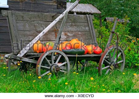 Old cart, pumpkins as decoration - Stock Photo
