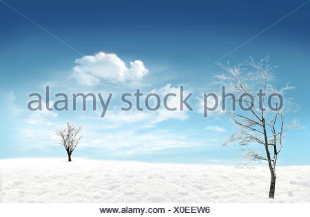 Winter: snowfield with tree and blue sky in the background - Stock Photo