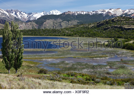 Poplar trees in the wind in front of the Chilean Andes on the Rio Chacabuco, Cochrane, Region de Aysen, Patagonia, Chile - Stock Photo
