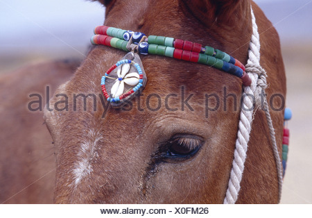 mule (Equus asinus x caballus), portrait with headdress, Greece, Santorin. - Stock Photo