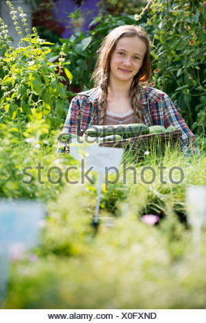Summer on an organic farm. A girl holding a basket of fresh marrows. - Stock Photo