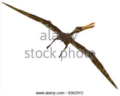 Anhanguera Flight on White - Stock Photo