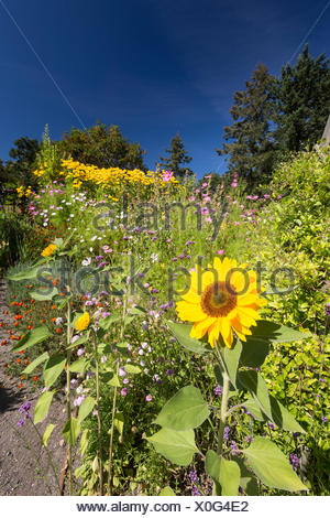 Located 12 kms north of downtown Victoria, the Horticultural Centre of the Pacific welcomes visitors to it's public gardens, cared for by volunteers, staff and students.  Victoria, Vancouver Island, British Columbia, Canada - Stock Photo
