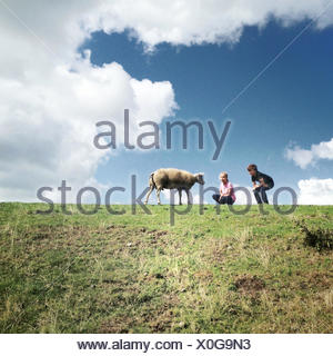 Two children with a sheep in a field - Stock Photo
