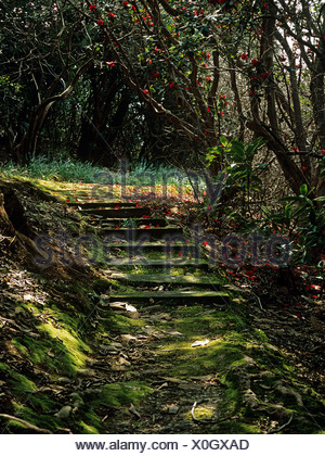 Path with steps in shade