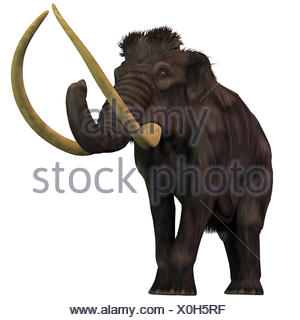 Woolly Mammoth on White - Stock Photo