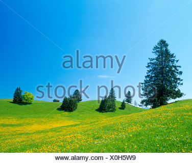 Landscape near Fuessen, spring, east Allgaeu, Bavaria, Germany, Europe - Stock Photo