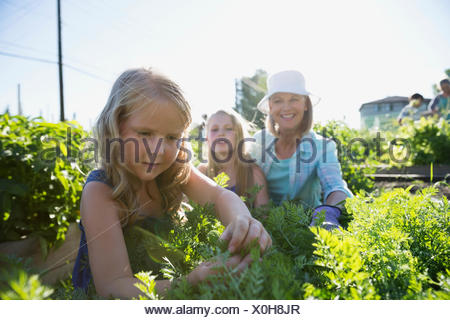 Grandmother and granddaughters tending to plants in garden - Stock Photo