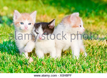 kittens on the grass - Stock Photo