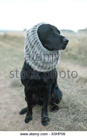 Black dog wearing gray knit scarf sitting on dirt road - Stock Photo