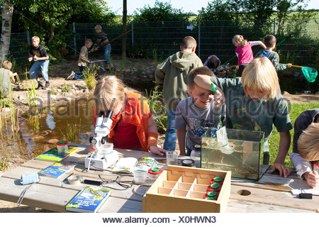 primary school pupils watching animals in an aquarium and under a microscope caught in the self-built pond in the school garden - Stock Photo