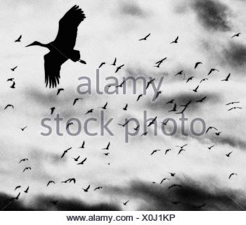 Stork. Manzanares el Real, Madrid province, Spain - Stock Photo