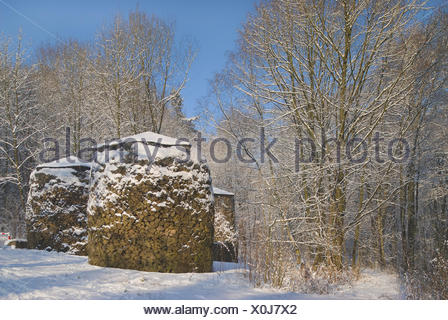 Snow-covered forest with covered piles of wood, timber industry - Stock Photo