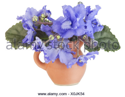 Gentle blue violets in a small jug - Stock Photo