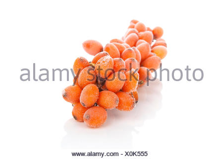 Sea-buckthorn twig with frost on berries isolated on white background. Alternative medicine, natural antioxidant. - Stock Photo