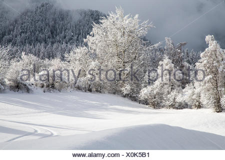Trees covered with snow after a winter snowfall. Lombardy. Italy. Europe - Stock Photo