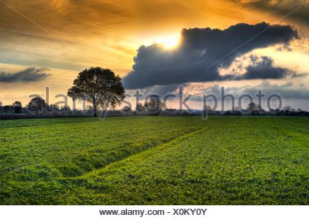 meadows at sunset, Germany, Naturschutzgebiet Kirchwerder, Hamburg - Stock Photo