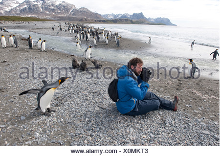 A photographer filming emperor penguins. - Stock Photo
