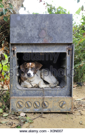 Old gas stove with a dog as a doghouse, Brazil, South America - Stock Photo