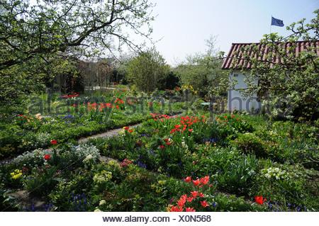 Tulips in a community garden - Stock Photo