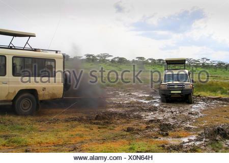 safari car sticking fast in the mud, safari car towing off, Tanzania, Serengeti National Park - Stock Photo