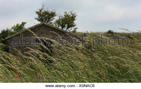 grasses in the wind ... - Stock Photo