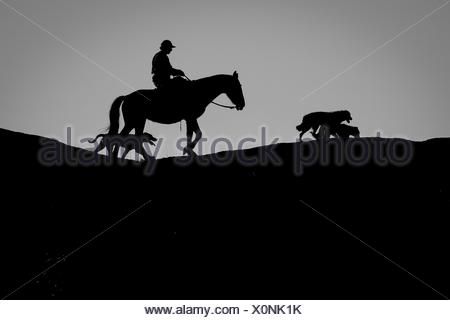 Silhouette man riding horse while dogs walking on hill against clear sky - Stock Photo