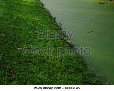 High Angle View Of Fresh Green Grass By Algae Floating In Lake - Stock Photo