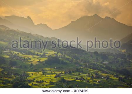 Switzerland, St. Gallen, Ober Toggenburg, alpine grassland, evening light, - Stock Photo