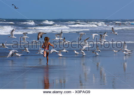 Young girl running along beach among flock of Royal Terns (Thalasseus Maximus)in flight.   St Augustus ,florida, USA. - Stock Photo