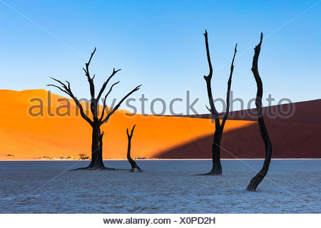 Dead Vlei, dead Acacia trees in the Namib desert at sunrise, Namibia. Africa - Stock Photo