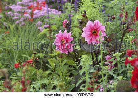Garden, Flower Bed, Flowers, Differently, Blooms, Bed, Plants, Flowers