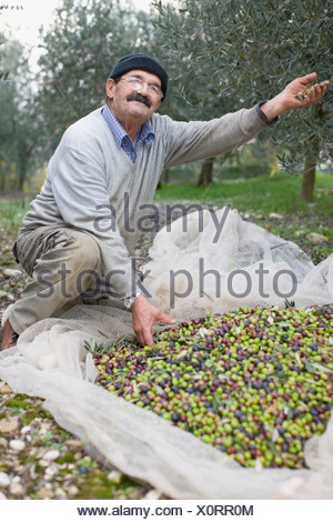 Old man with olive harvest - Stock Photo