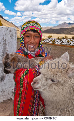 alpaca (Lama pacos, Vicugna pacos), Peruvian boy in traditional clothing with alpacas portrait of a child, Peru, La Raya - Stock Photo