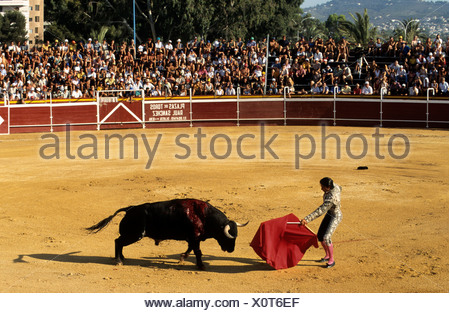 Bullfighter holding red cape in front of a bloodied black bull during a bullfight at the Plaza de Toros von Calpe Bullring, Cos - Stock Photo