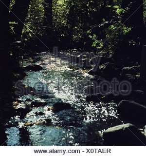 Small stream flowing through forest. - Stock Photo