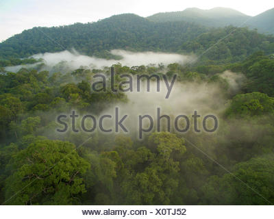 Morning mist hangs in the canopy of lowland dipterocarp rain forest. - Stock Photo
