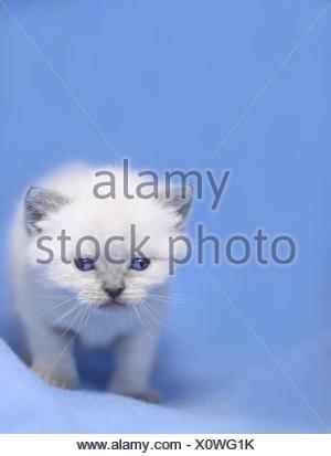 little babycat - Stock Photo