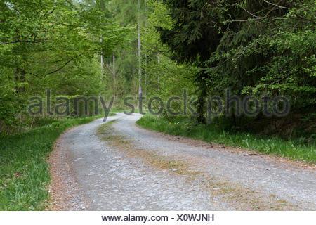 Waldweg im Harz - Stock Photo