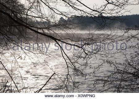 breiter luzin in winter, feldberger seenlandschaft, mecklenburgische seenplatte district, mecklenburg-vorpommern, germany - Stock Photo