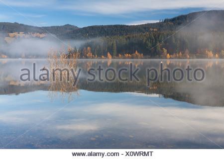 Fog on Lake Schluchsee with reflections, autumn mood, Breisgau-Hochschwarzwald district, Baden-Wuerttemberg - Stock Photo