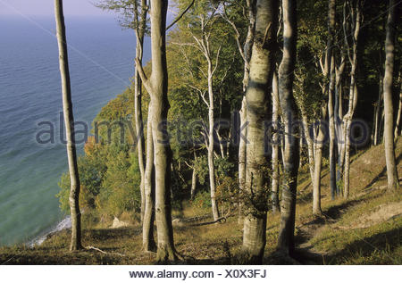 beech forest in the national park Jasmund near Sassnitz, Baltic coast, Mecklenburg-West Pomerania, Germany, Europe, park, the Baltic Sea, coast, steep coast, cliff, abyss, sea, the Baltic Sea, nature, wood, booking, trees, sunny, green, - Stock Photo