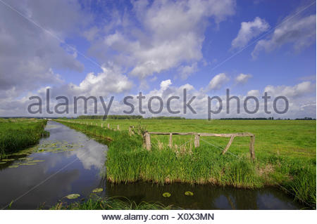 wet meadow, osterfeine, damme, vechta district, oldenburger münsterland, lower saxony, germany - Stock Photo