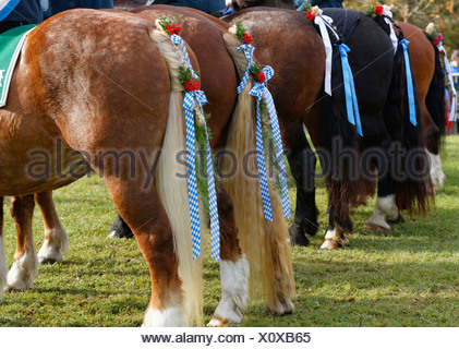 Germany, Upper Bavaria, Wildsteig, Horse tails decorated for Leonhardi prcession - Stock Photo
